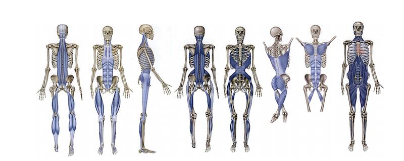 Anatomy Trains Myofascial Meridians Meridians
